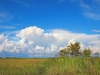 On the Tamiami Trail